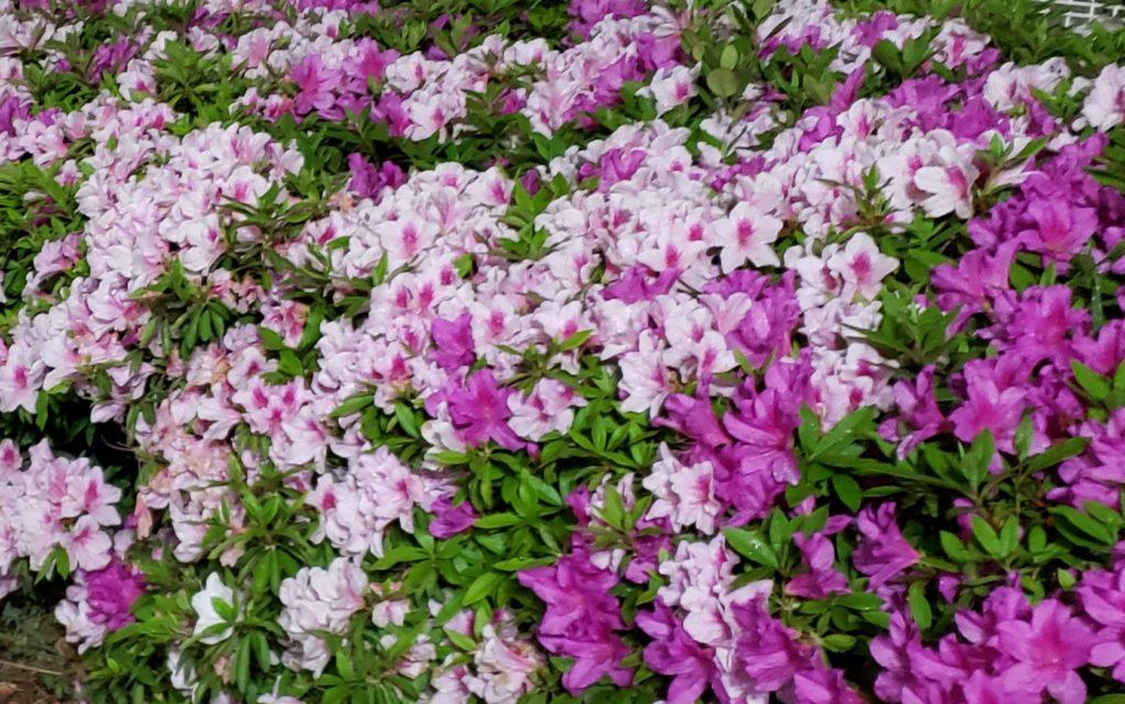 梅雨の晴れ間に咲く一輪の花のように この時期を清々しく過ごす香り