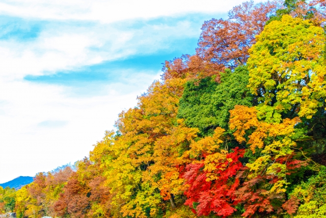 🎃柔らかな日に照らされ 秋色に輝く木々 日ごとに寒さが増すなかでも、 キラキラ輝く香り🍁