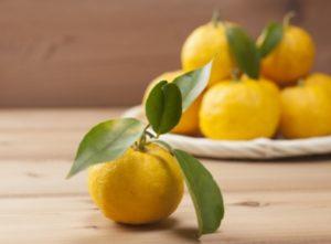 🍁冬至の日、 檜の湯船に浮かぶ鮮やかな黄色の柚子 日本の風習を感じ、 心も身体も温まる香り❄