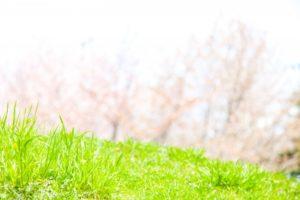 早春の柔らかな日差しに包まれて、ついうたた寝したくなる香り