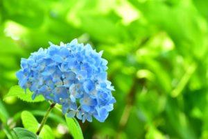 🐌梅雨の晴れ間に咲く一輪の花のように この時期を清々しく過ごす香り🌼